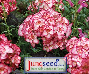 Jung Seed New Variety