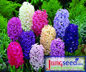 Jung Seed for New Varieties