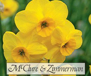 McClure & Zimmerman