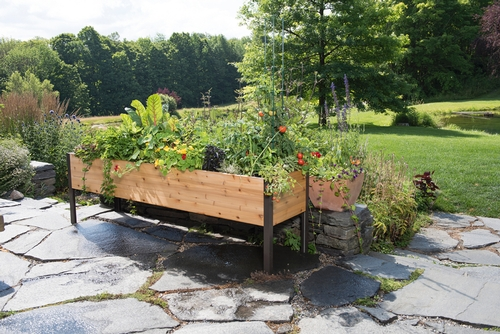2 x8 elevated cedar planter box national garden bureau for Gardeners supply company