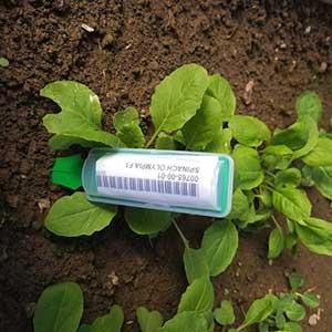 Weather Proof Garden Markers