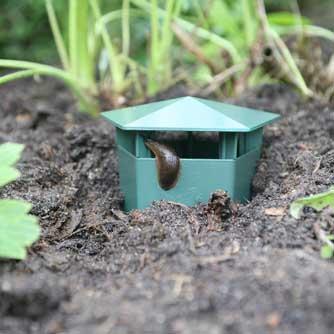Haxnicks Slug Buster Traps