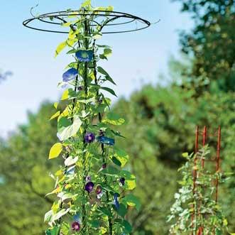 Gardener's Supply Essex Trellis - National Garden Bureau