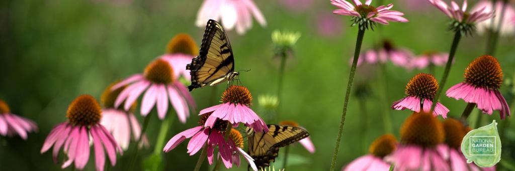 Native Plants for your Garden - National Garden Bureau