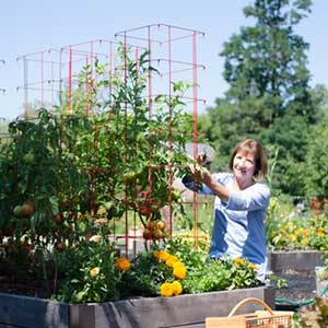 Gardener's Supply Tall Tomato Cage - National Garden Bureau