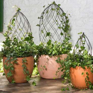 Twist Topiary Frames
