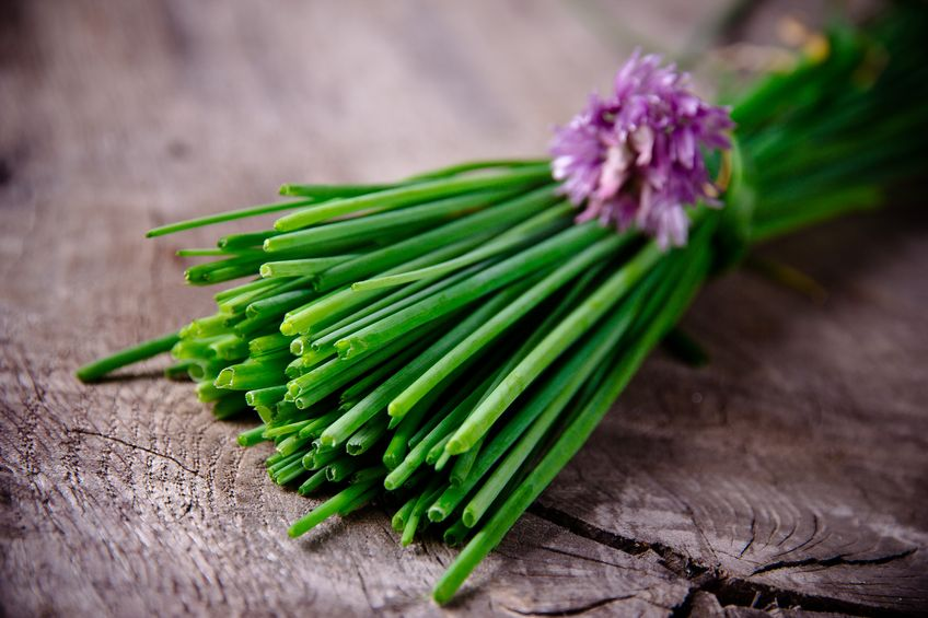 Growing and cooking with chives