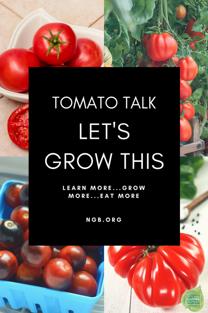 Let's Grow This - Tips for the best tomatoes