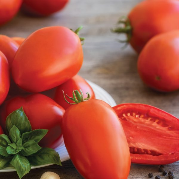 Tomato Gladiator