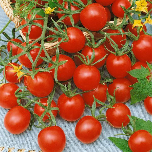 Tomato Lady Bug