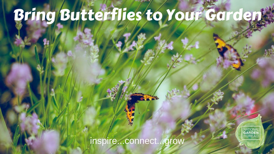 Bring Butterflies to your garden