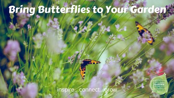 Bring Butterflies to your garden