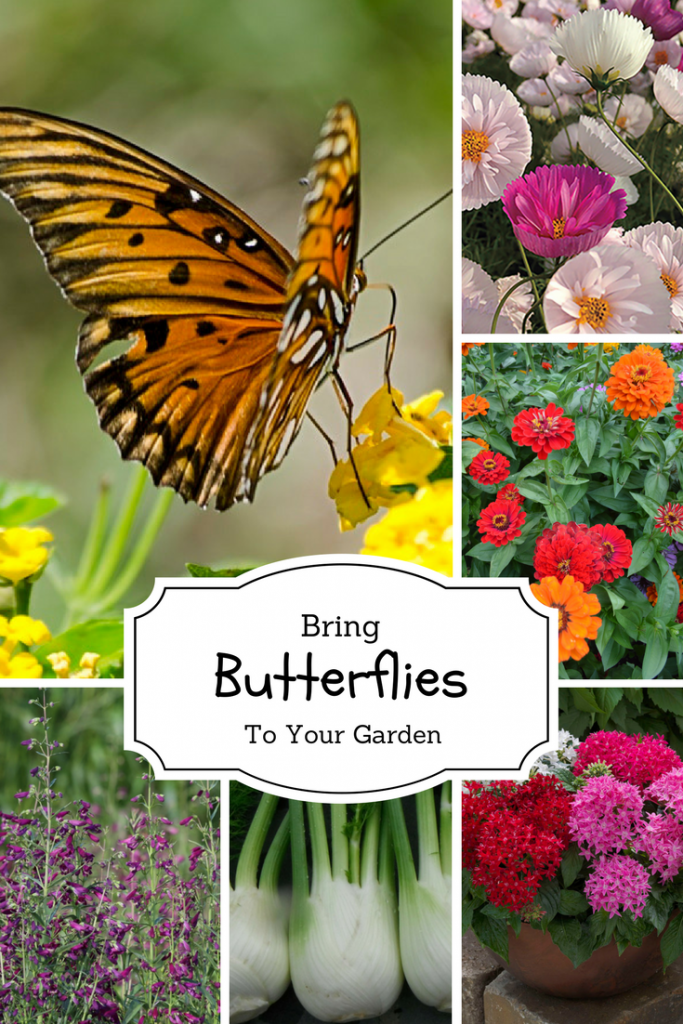 Bring Pollinators to your garden with flowers and vegetables