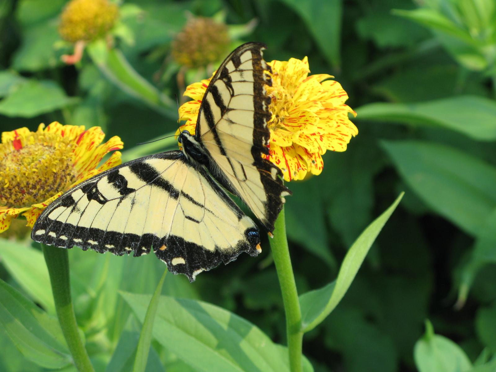 butterfly gardening for children national garden bureau
