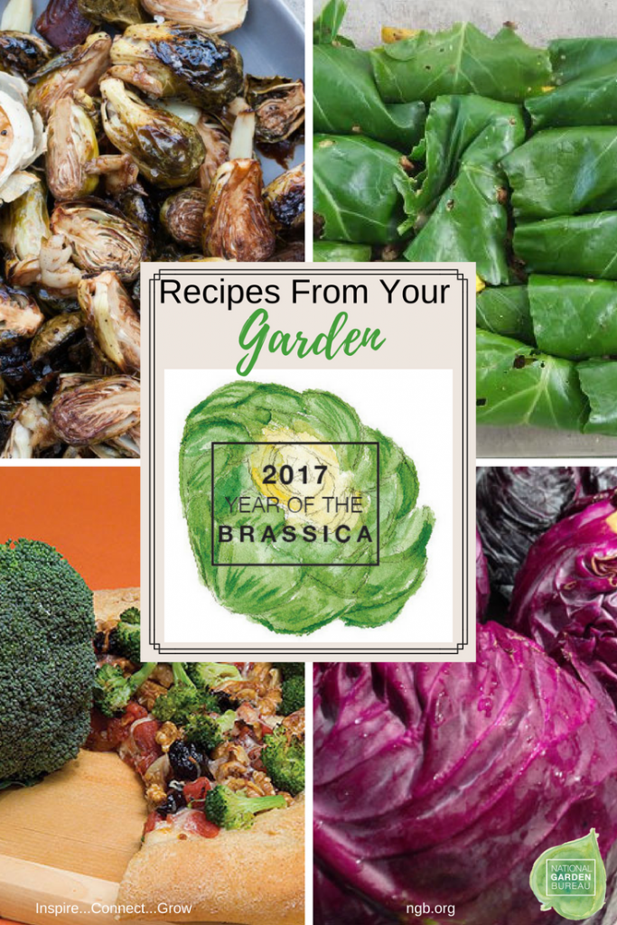 Year of the Brassica Recipes from Your Garden