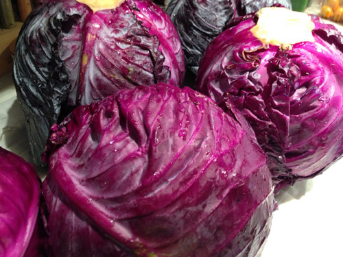 Grow Your Own sauerkraut recipe
