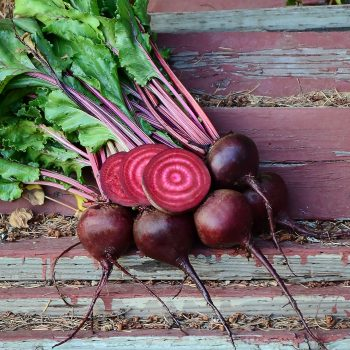 Beet Lutz Green Leaf from Territorial Seed Company - Year of the Beet - National Garden Bureau