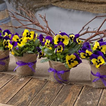 Pansies make the perfect centerpieces and party favors
