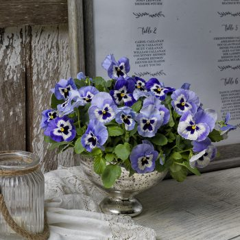 Pansies are perfect for decorating any event!