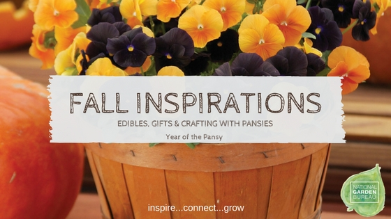 Fall Inspiration with Pansies!