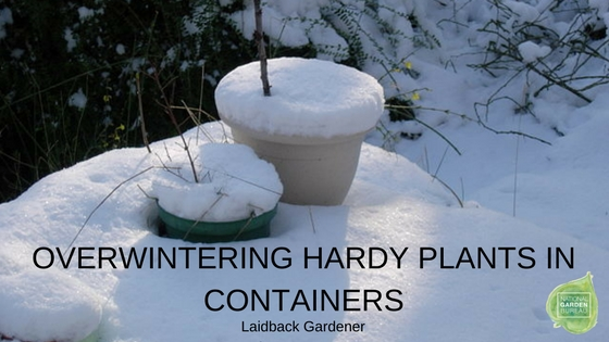 Overwintering Hardy Plants in Containers - National Garden Bureau