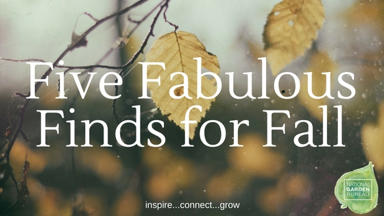 Five Fabulous Finds for Fall - National Garden Bureau
