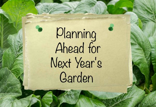 Plan Your Garden Ahead with National Garden Bureau