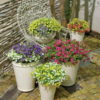 Calibrachoa Million Bells Combos from Suntory - Year of the Calibrachoa - National Garden Bureau
