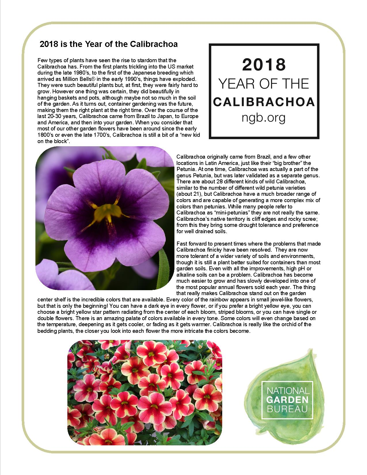 Year Of The Calibrachoa National Garden Bureau Container Gardening
