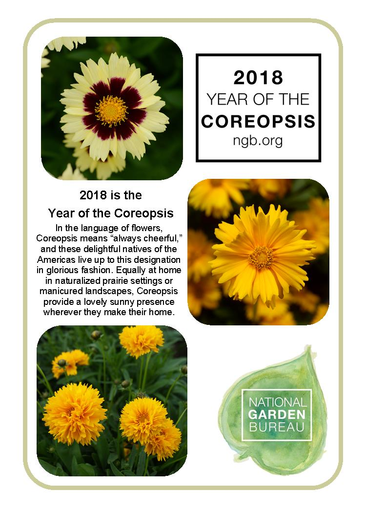 Year of the coreopsis national garden bureau native perennial andiamo yellow red mightylinksfo