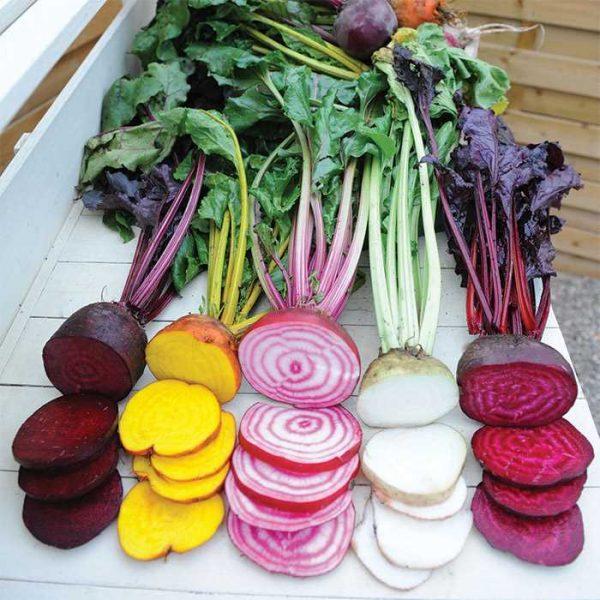 Rainbow Beet Mix - Year of the Beet - National Garden Bureau