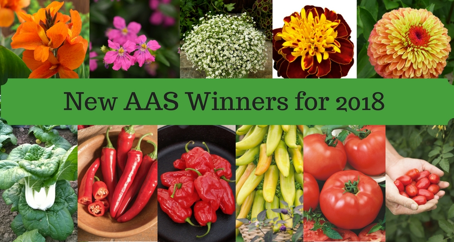 AAS Winners for 2018 #garden #flowergarden #vegetablegarden