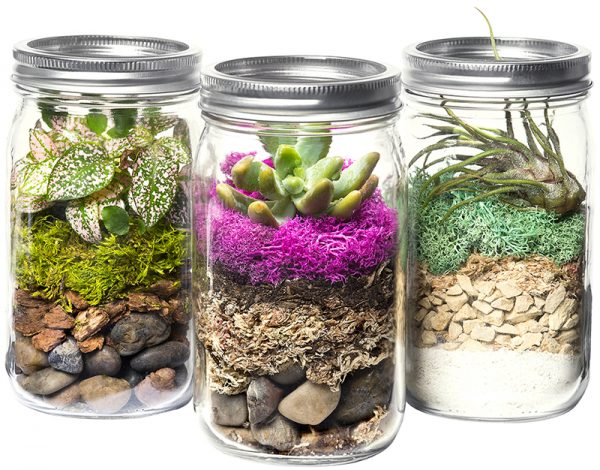 Supermoss Terrarium Jar Kits