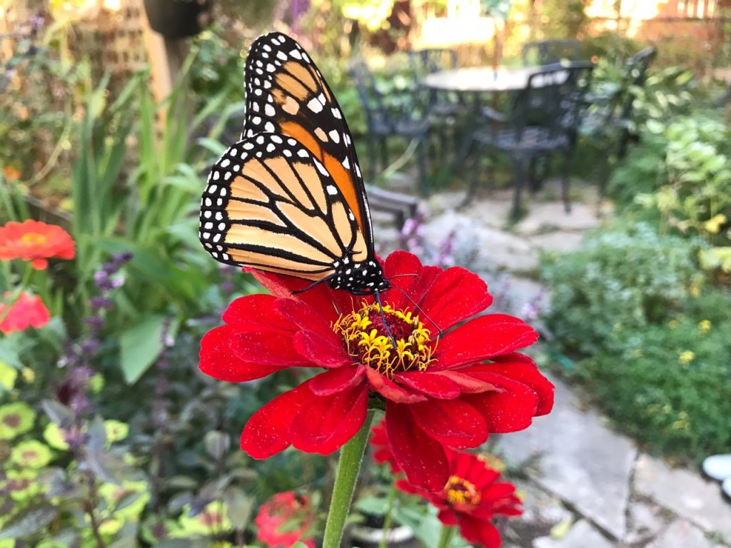 Toronto Gardens, Helen Battersby - Favorite Garden Plant for 2017