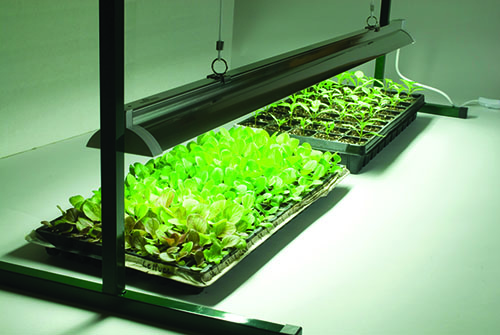 Value Jump Start – 4' Grow Light System