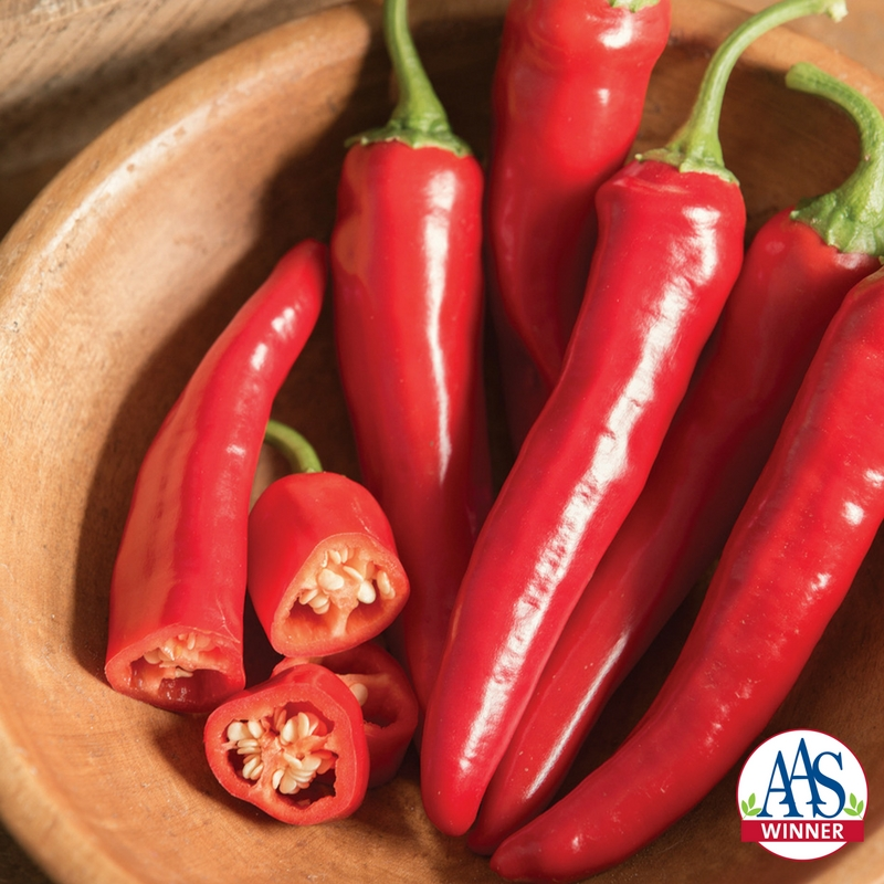 Pepper cayenne Red Ember a 2018 AAS Winner