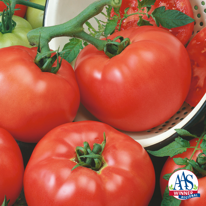 Tomato Chef Choice Red - a 2018 AAS Winner