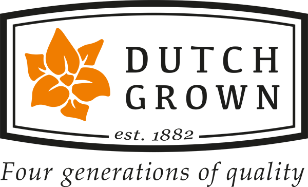 Dutch Grown Bulbs