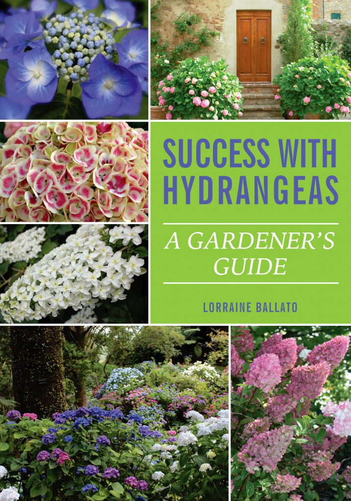 Success With Hydrangeas by Lorraine Ballato - National Garden Bureau