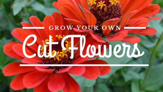 Grow Your Own Cut Flower Garden!
