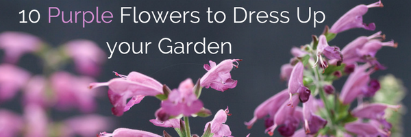 10 Purple Flowers to dress up your garden - National Garden Bureau