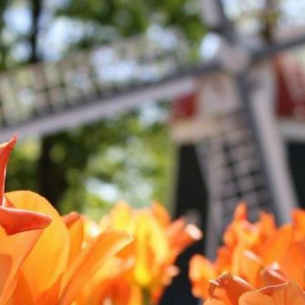 #TulipWatch #YearoftheTulip - National Garden Bureau