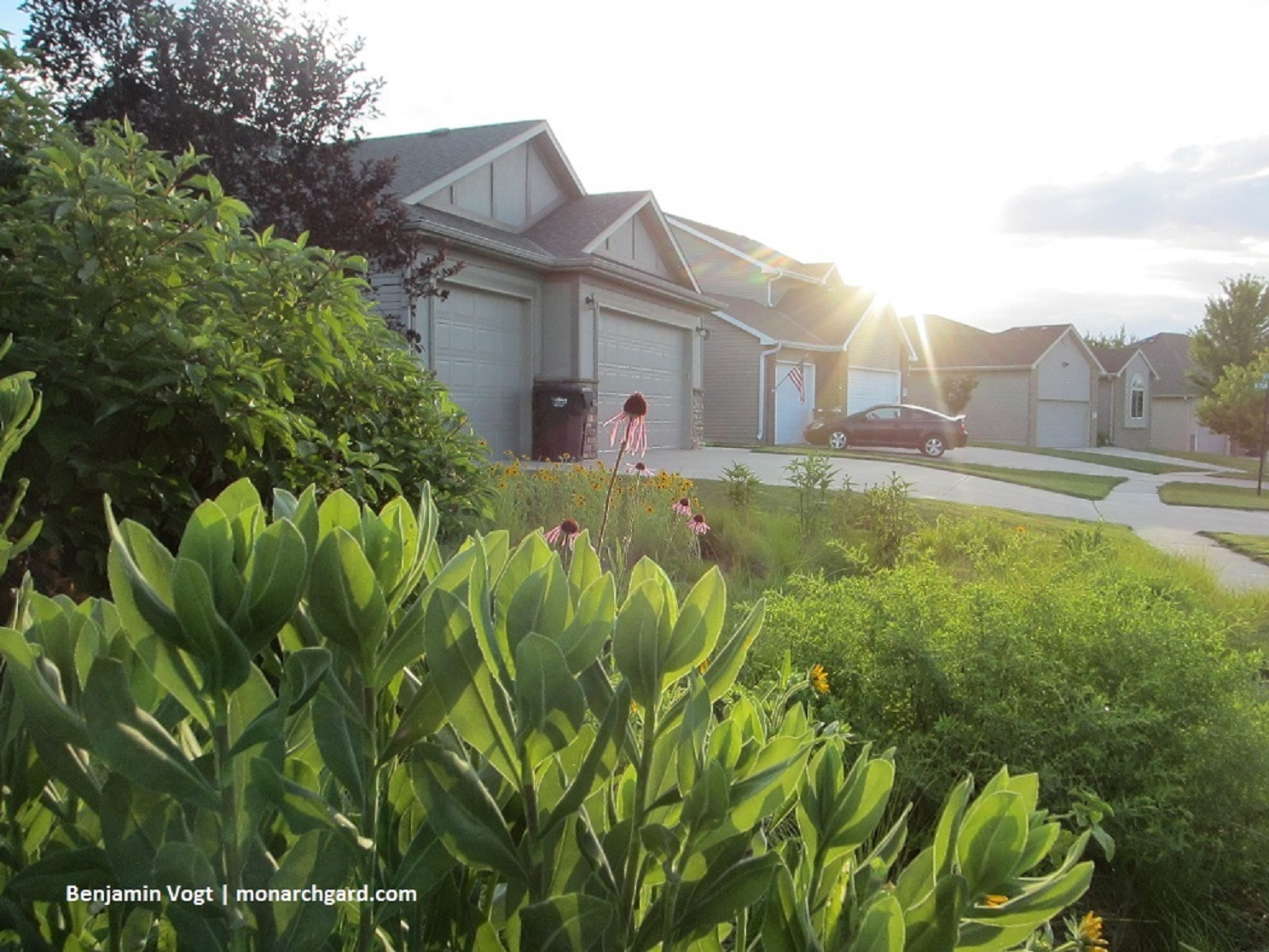 5 Steps To Obtaining An Almost Maintenance Free Landscape