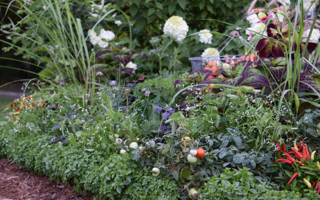 Basil edging - National Garden Bureau