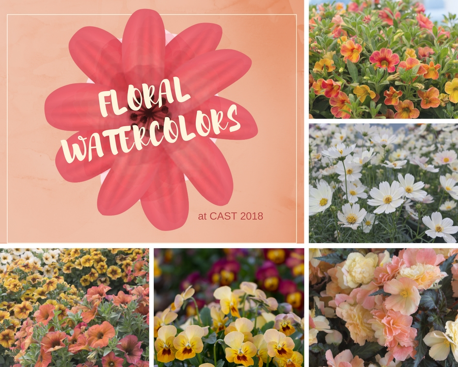 Floral Watercolors discovered at CAST 2018