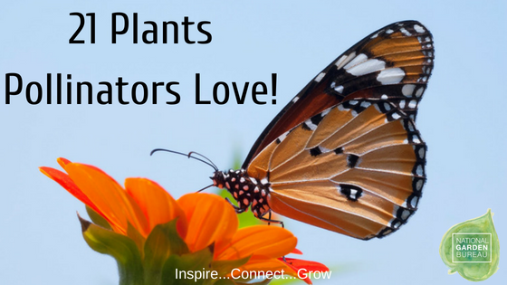 21 Plants Pollinators Love - National Garden Bureau