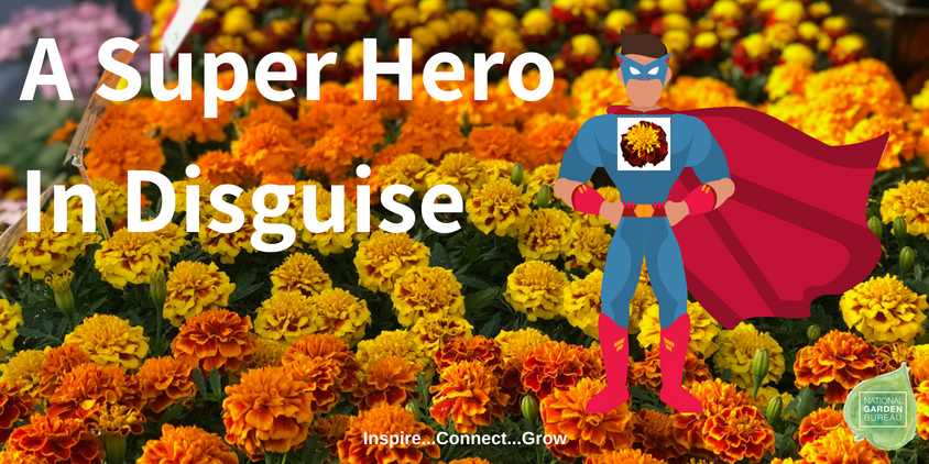 Benary - A Super Hero in Disguise - National Garden Bureau