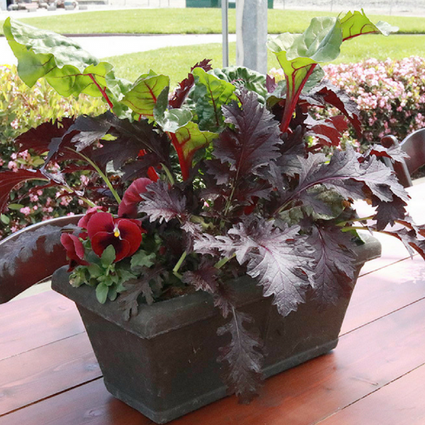 Swiss Chard, Kale and Pansies in a container garden