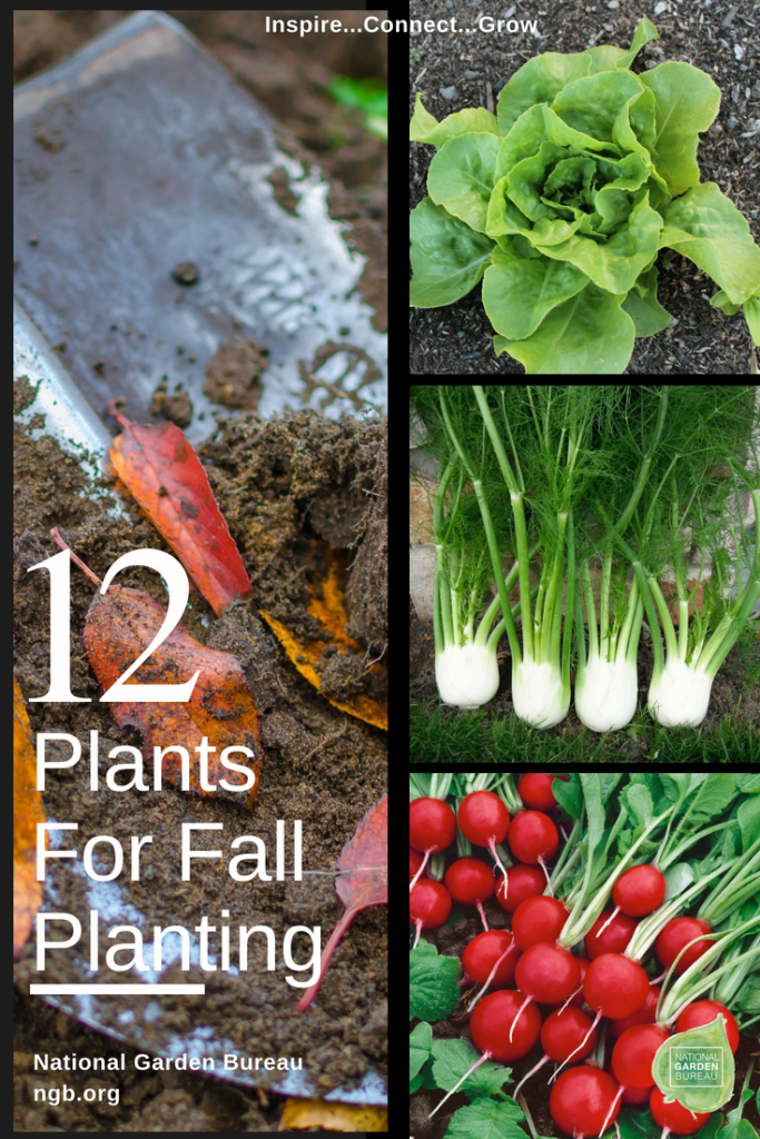 12 Plants for Fall Planting - National Garden Bureau - #gardeningtips