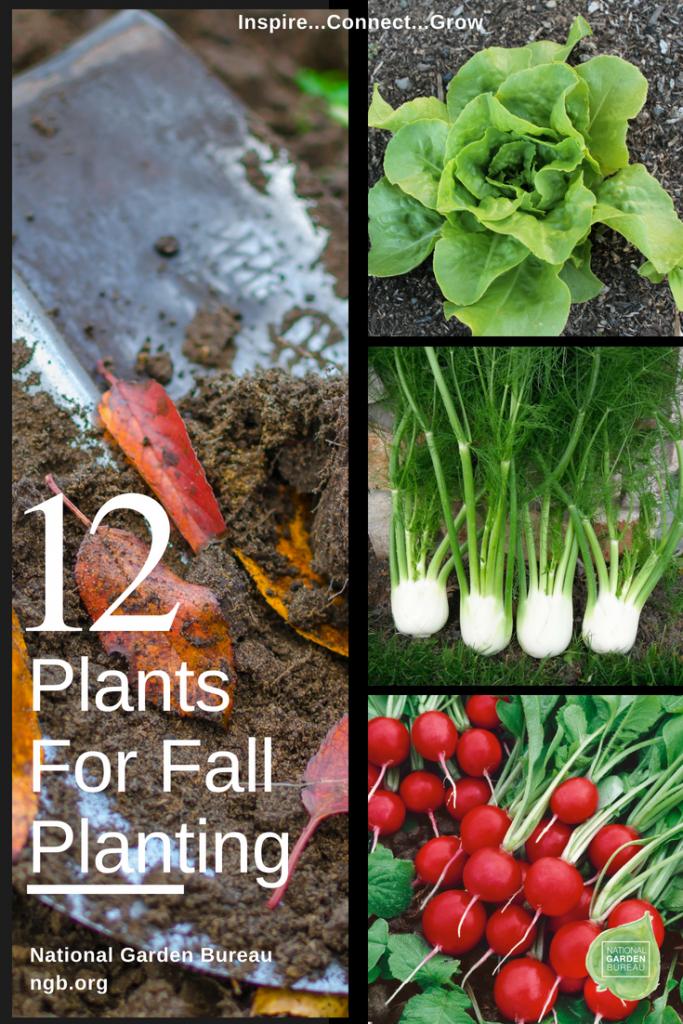 12 Plants for Fall Planting - National Garden Bureau - #gardeningtips